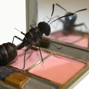 Igor Kozeltsev ant looks into mirror